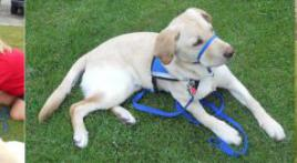 Canines For Combat Veterans Walk-A-Thon-14 May 2011