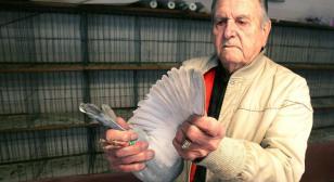 World War II veteran recounts pigeoneering in Pacific